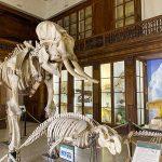 museo zoologia napoli scheletri elefante