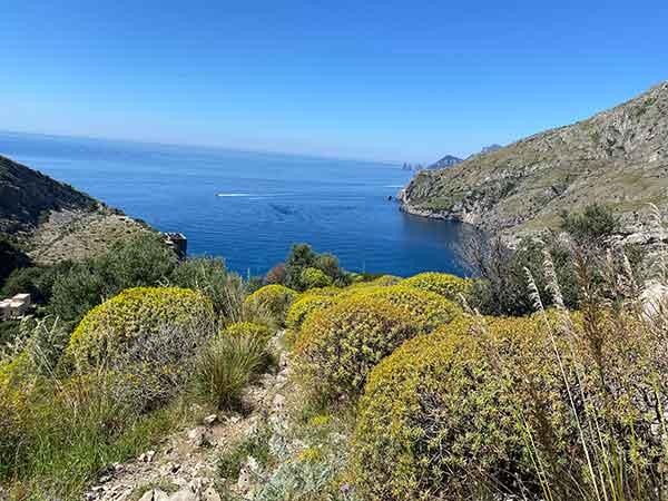baia ieranto macchia mediterranea