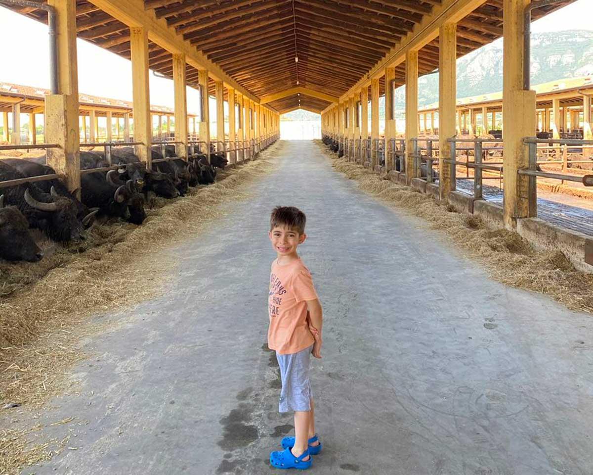 bambino in una stalla